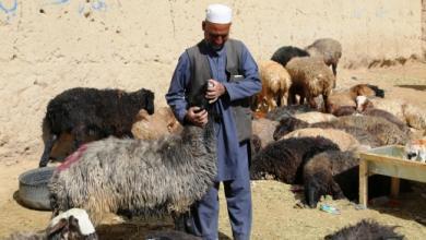 """صورة عيد الأفغان دون """"حمامات دم"""""""