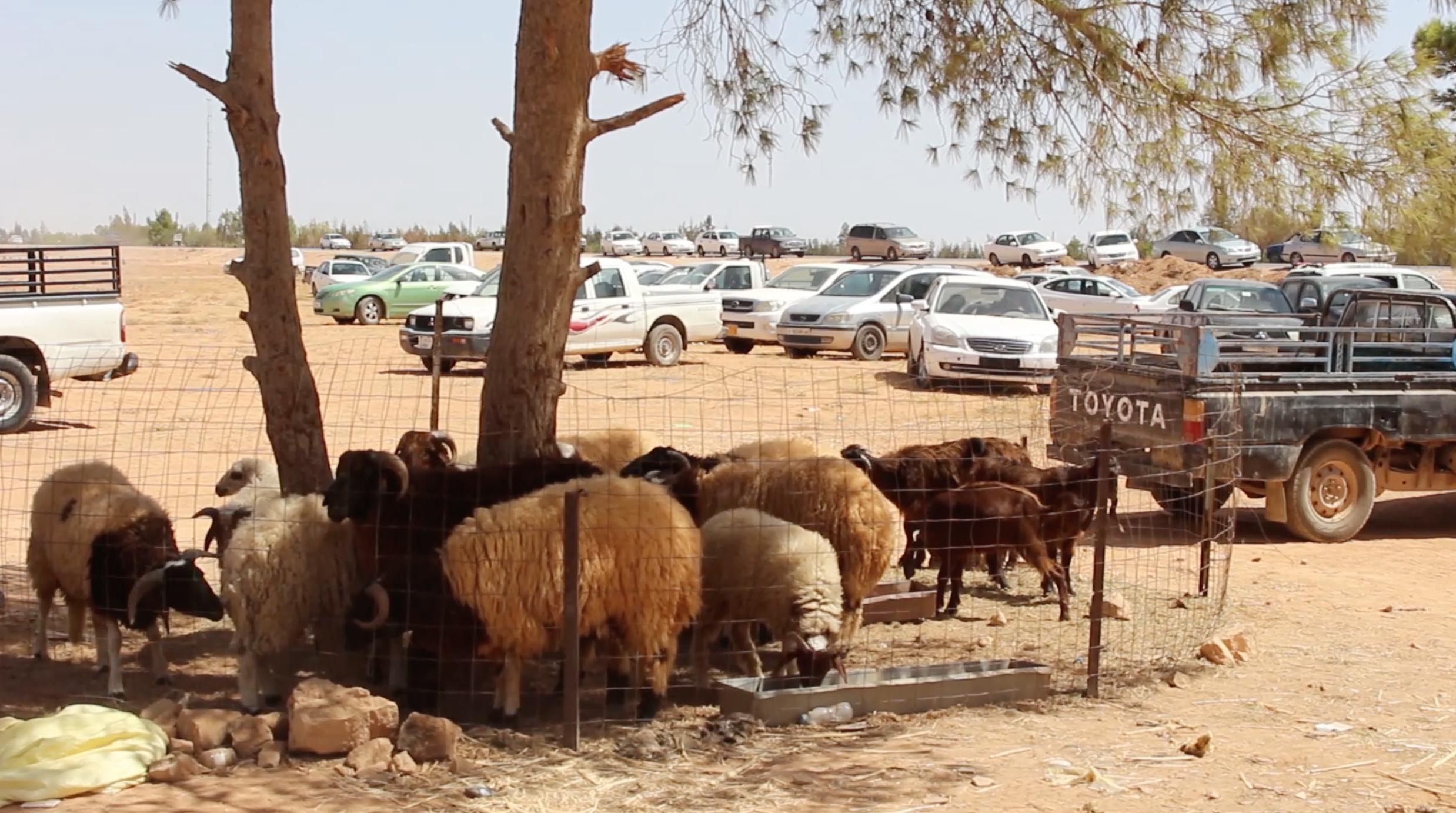 سوق اضاحي العيد في ليبيا