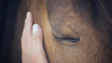 صورة لحصان