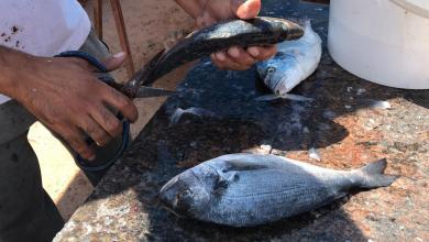 Photo of مساعٍ لتسويق الأسماك الليبية في إيطاليا
