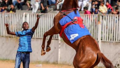 Photo of نادي زوارة يُشرف على سباق الحلبة للفروسية