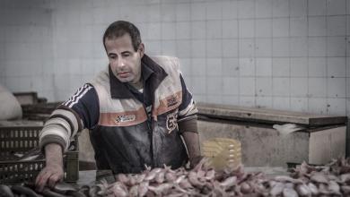 Photo of نشرةالصيدالبحري والموانئ الليبية