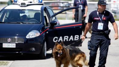 """صورة صدّق أو لا تُصدّق.. مافيا إيطالية تُخطّط لـ""""اغتيال كلب"""""""
