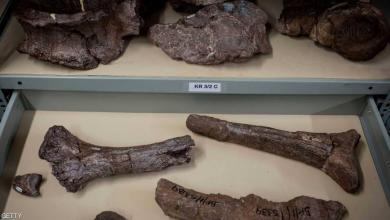 Photo of اكتشاف بقايا حيوان بحجم الفيل وفم يشبه المنقار