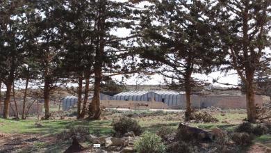 مرزعة اشنيشن الحكومية بالجبل الأخضر