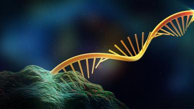 Photo of طريقة جديدة لتحديد العمر البيولوجي للإنسان
