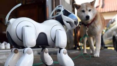 Photo of كلاب آلية تصل إلى بيوتكم قريبا