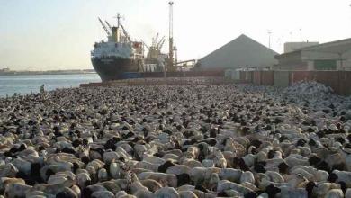 صورة مواشي وحاويات بضائع تصل ميناء الخمس