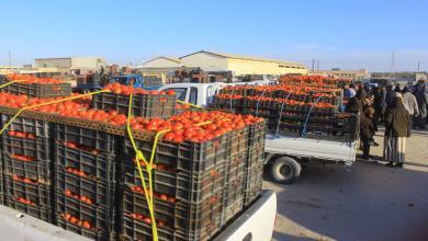 صورة طماطم جالو.. أسعار تُخالف الإنتاج الوفير
