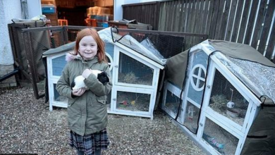 صورة قصة عائلة بريطانية تسكن مع 46 حيواناً
