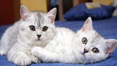 Photo of تحذيرات من مخاطر تربية القطط بالمنازل
