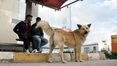 Photo of وفاء الكلب يواجه تنكّر الإنسان