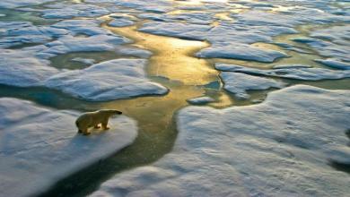 صورة مخاوف من تغيّر خارطة القطب الجنوبي