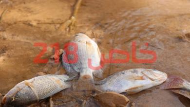 صورة تحذير من أسماك نافقة في سد وادي كعام