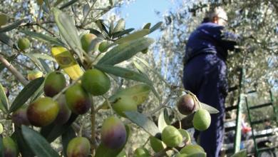 صورة وزارة الزراعة تتفقّد احتياجات مُزارعي رقدالين