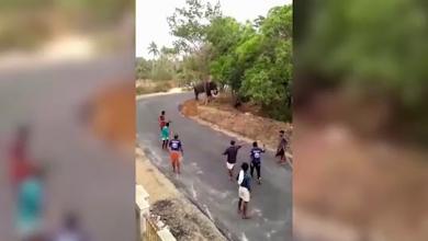 Photo of بالفيديو.. فيل غاضب ينشر الرعب ويحطم السيارات