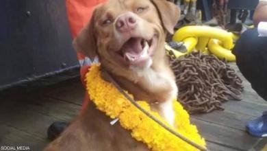 """صورة كلب يُحقق """"مُعجزة"""" وينجو من موت محتم"""
