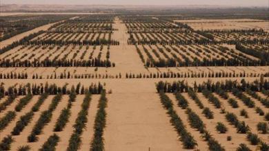صورة تحذيرات من ليبيا دون أراضٍ زراعية