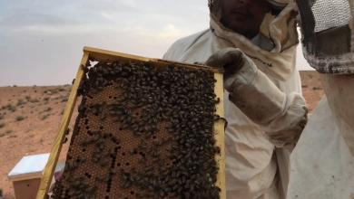 "Photo of ""تفاصيل مشوّقة"" لتربية النحل في الحرابة"
