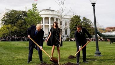 Photo of موت شجرة الصداقة الفرنسية الأميركية
