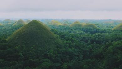 Photo of غرس الأشجار.. شرط التخرج في الفلبين