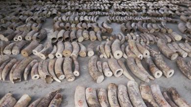 صورة لماذا يُقاتل الصيادون من أجل قرون وحيد القرن؟