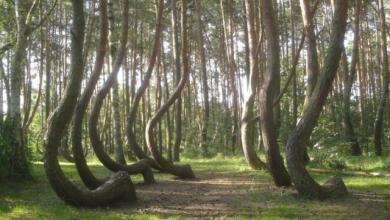 صورة إهمال السُيّاح يدفع روسيا لتطويق الغابة الراقصة