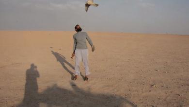 Photo of المقرون.. موسم هجرة الطيور الجارحة والصيد البري -((بالصور))