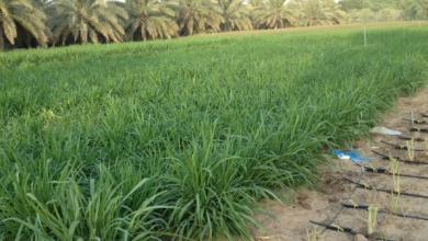 """Photo of مزارع طَمُوح يدخل """"البونيكام"""" إلى السوق الليبي"""