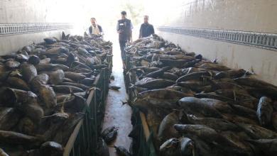 Photo of ضبط شاحنة مُحمّلة بالأسماك الفاسدة في صرمان