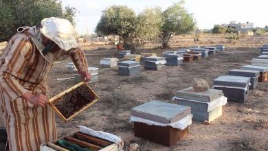 صورة معاناة مُربي النحل في بنغازي