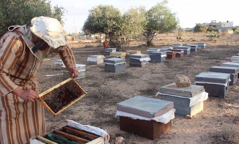 معاناة مربي النحل في بنغازي بسبب مرض الفروة