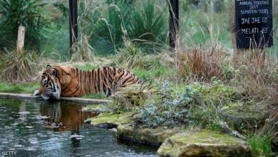 "Photo of أقدم حديقة حيوانات في العالم تغلق أبوابها.. والسبب ""كورونا"""