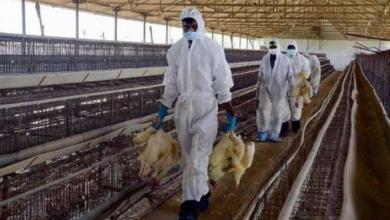 Photo of مع أزمة كورونا.. العالم يواجه وباء جديدا