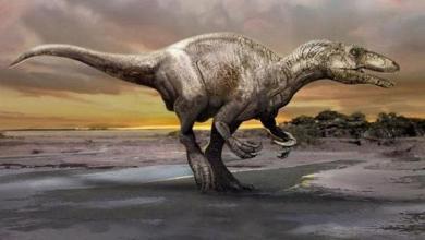 صورة الأرجنتين تشهد اكتشاف بقايا آخر ديناصور لاحم