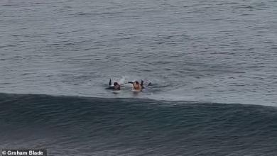 صورة راكب أمواج ينجو بأعجوبة من هجوم قرش