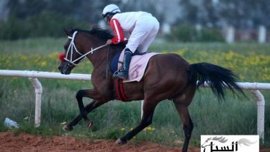 صورة مشاركة ليبية في سباق تولوز للفروسية