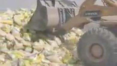 Photo of إتلاف شحنة أرز في الخمس لاحتوائها حشرات (فيديو)