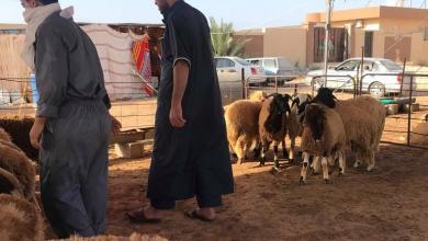 صورة داخلية الوفاق تضع خطة لشراء أضاحي العيد