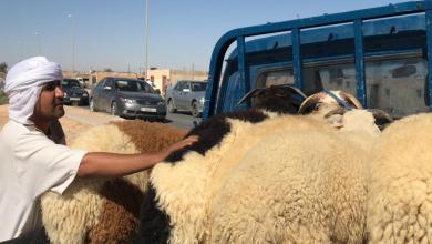 Photo of ركود يُخيّم على سوق الأضاحي في بدر