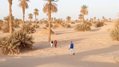 صورة غابات النخيل في وادي عتبة.. إرث مُهدد بالاندثار