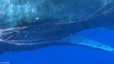 """صورة بالفيديو.. خفر السواحل الإيطالي يحاول إنقاذ حوت """"سيئ الحظ"""""""