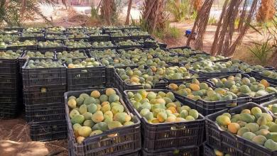 Photo of المانجا المحلية تغزو الأسواق الليبية (صور)