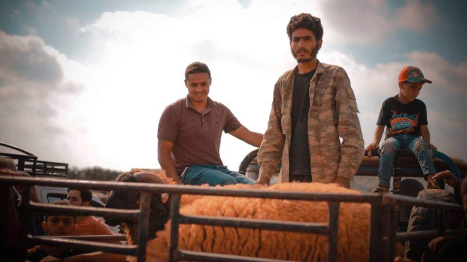 سوق المواشي في بلدة أبوترابة بالجبل الأخضر يشهد انخفاضاً في الأسعار