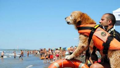 Photo of كلبة تنقذ طفلا من الغرق في إيطاليا.. شاهد