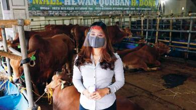 "Photo of كورونا يرفع مبيعات المواشي ""إلكترونيا"" في إندونيسيا"