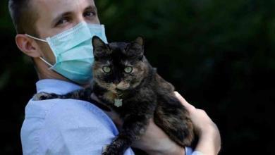 Photo of دراسة: الإنسان قد ينقل كورونا للحيوانات الأليفة