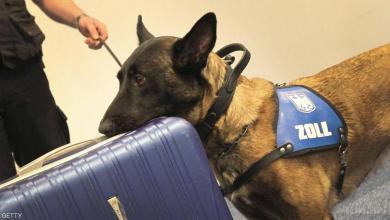 صورة كلبة تُحبط تهريب ربع مليون يورو بمطار ألماني