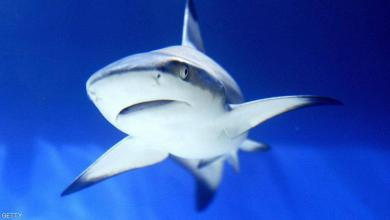 صورة ناشطون: لقاح كورونا يهدد حياة أسماك القرش!