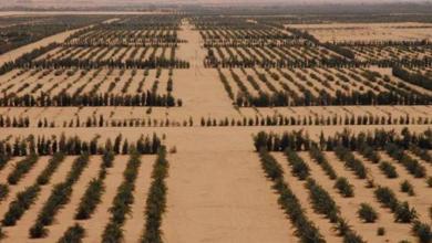 صورة الإهمال يضرب آلاف الهكتارات الزراعية في ليبيا